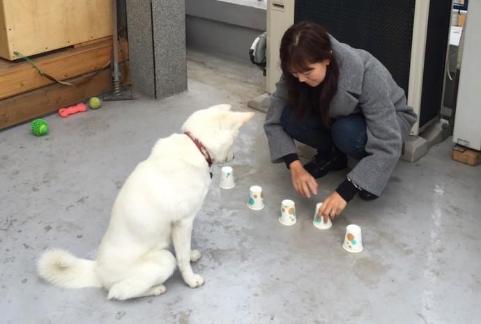 기다려를 잘 한다면 종이컵에 간식을 숨겨둔 뒤 개와 함께 야바위꾼 놀이도 해볼 수 있습니다.  - 오가희 기자 solea@donga.com 제공